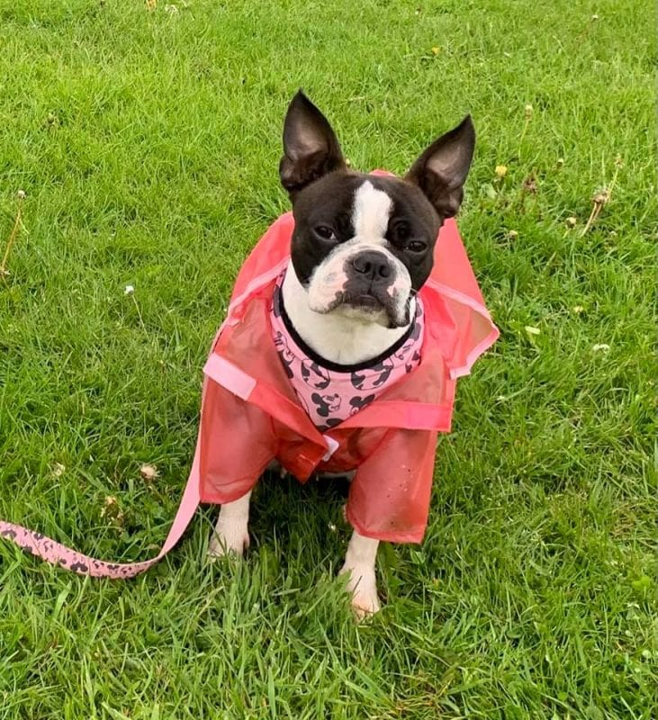 Primark is now selling raincoats for dogs – perfect for Manchester weather, The Manc
