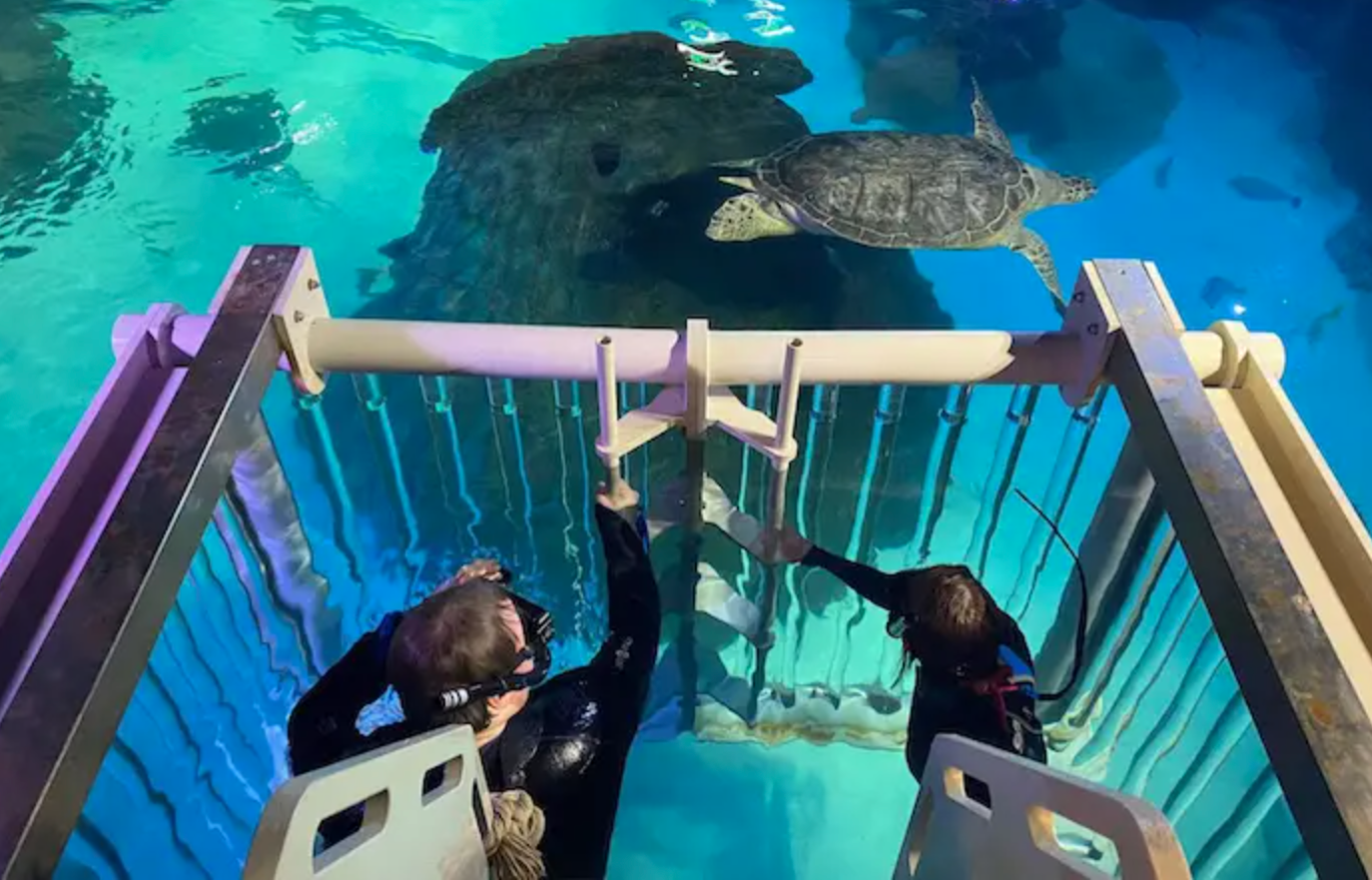 You can now go snorkelling with sharks, stingrays and giant turtles in Manchester, The Manc