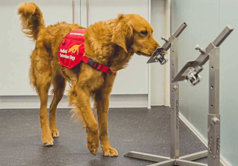 New study finds that trained dogs can detect COVID-19 in under one second with up to 94% accuracy, The Manc