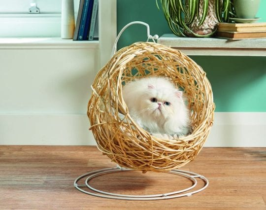 Aldi is bringing back its viral hanging egg chair, but this time it's for cats, The Manc