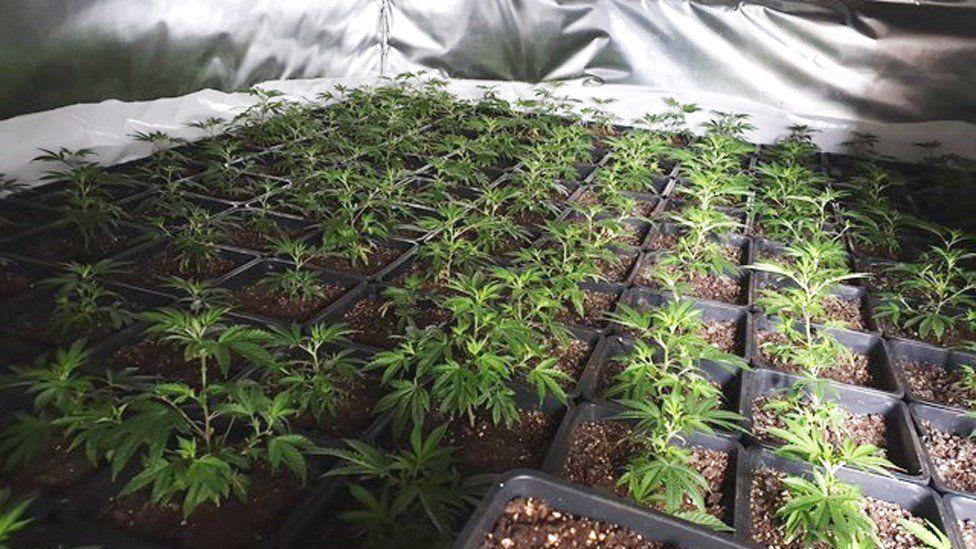 Cannabis farm worth £1 million found in flooded Bury property, The Manc