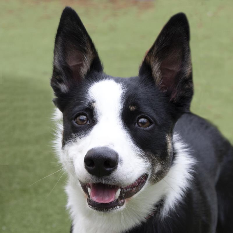 5 rescue dogs in Manchester looking for their 'forever home'   4 – 10 October 2021, The Manc
