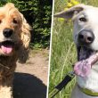 5 rescue dogs in Manchester currently looking for their 'forever home', The Manc