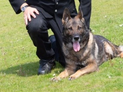 Greater Manchester Police dog violently attacked during arrest wins bravery award, The Manc