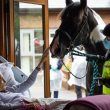 Local hospice arranges for terminally ill patient to say goodbye to her horse and pet dogs, The Manc