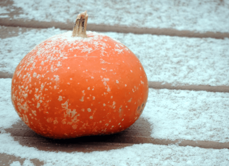 Will it be a 'white Halloween'? Met Office experts forecast snow to hit North West in coming weeks, The Manc