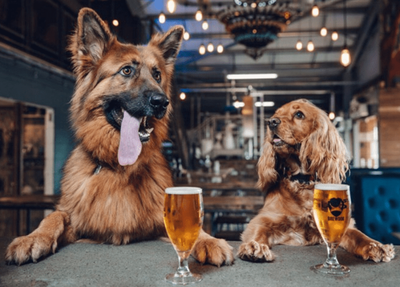 A huge dog 'pawty' with doggy ice cream and beer is happening at BrewDog's Manchester hotel, The Manc