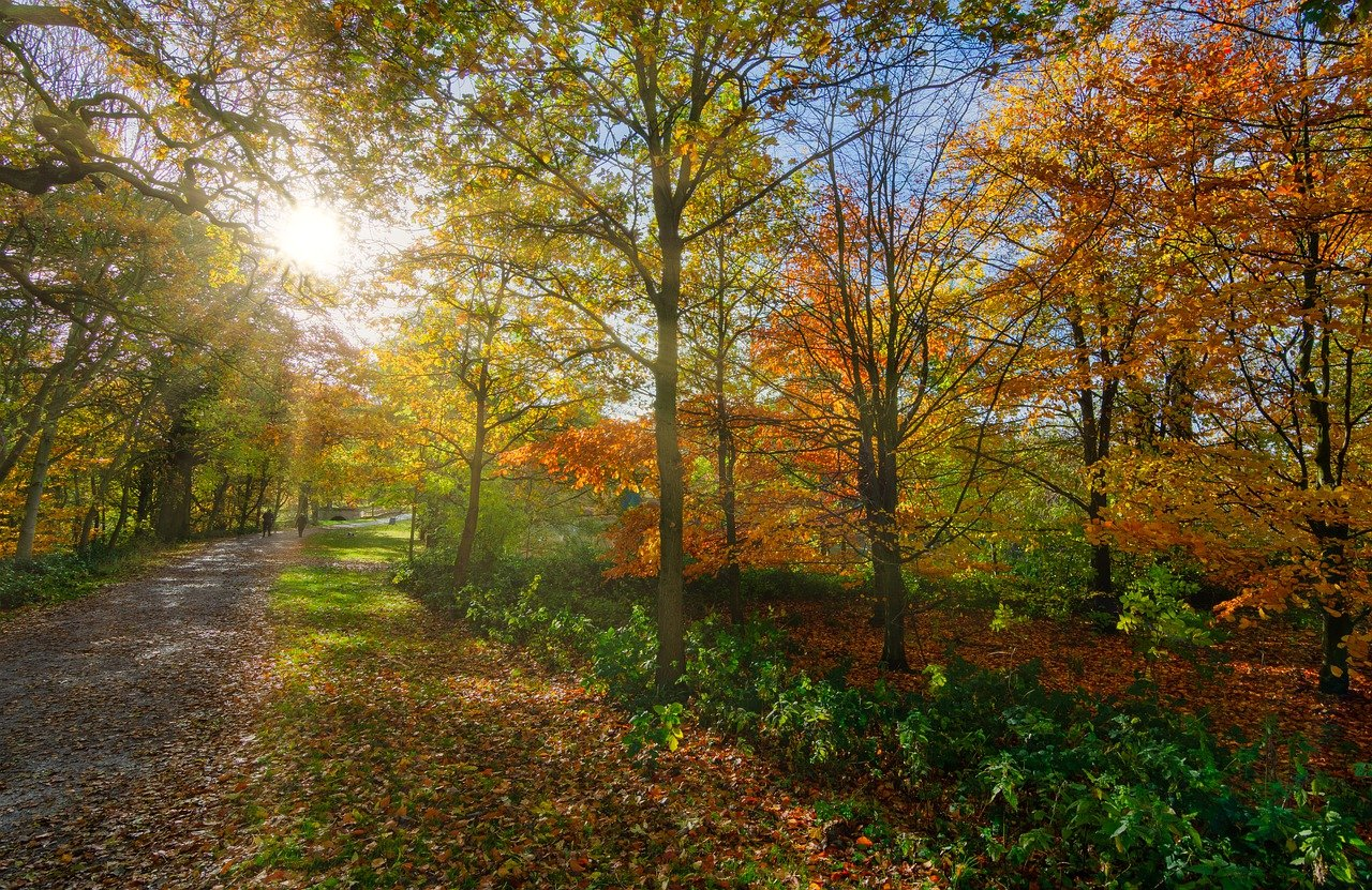 10 of the best autumn walks in Greater Manchester, The Manc