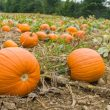 The best places to go pumpkin picking near Manchester this Halloween, The Manc