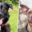 5 rescue dogs in Manchester looking for their 'forever home' | 25 – 31 October 2021, The Manc