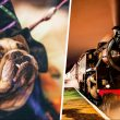 The best things to do in Greater Manchester this week | 25 – 31 October 2021, The Manc